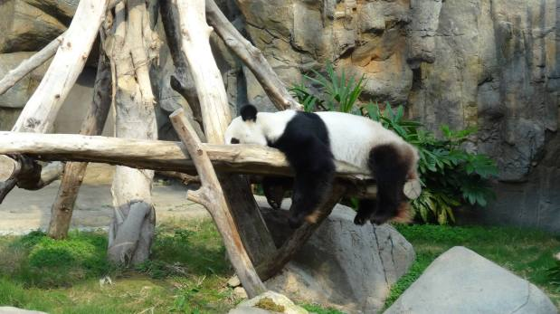 Giant Pandas and Oriental Adventures: Part two of our look at Ocean Park