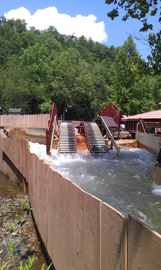 Dollywood Rapids (2)