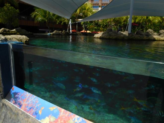 Rainbow Reef (3)