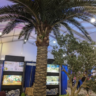 Palm Tree inside HaiHong booth.
