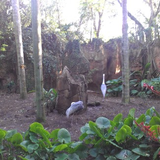 A look at one of Maharajah Jungle Trek exhibit.